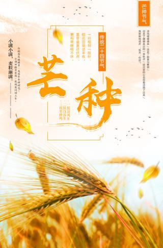 金色文艺二十四节气之芒种