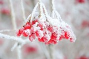 二十四节气今日霜降