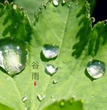 节气谷雨的节日活动