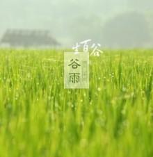 谷雨节气的传统习俗